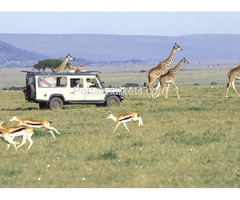 Kenya Tanzania budget safari tour packages
