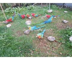 Parrots and eggs