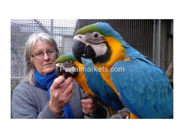 variety of parrots and exotic birds for sale. - 1/1