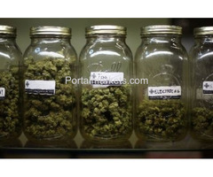 3189954703 good weed for sell