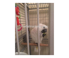 African grey, cockatoo,macaws,Amazons,elecdus for sale,whatsapp : +12486625079