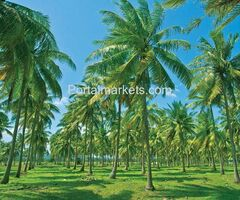 Get Premium Quality Coconut Coir Growing Media Offered By Ceyhinz Link International
